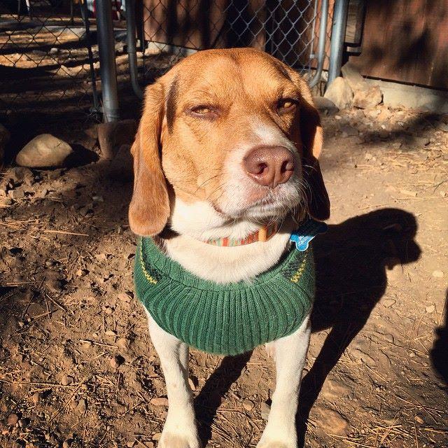 Turbo is a little judgemental.