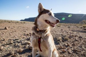 Gozer Enjoying the Mojave Desert.